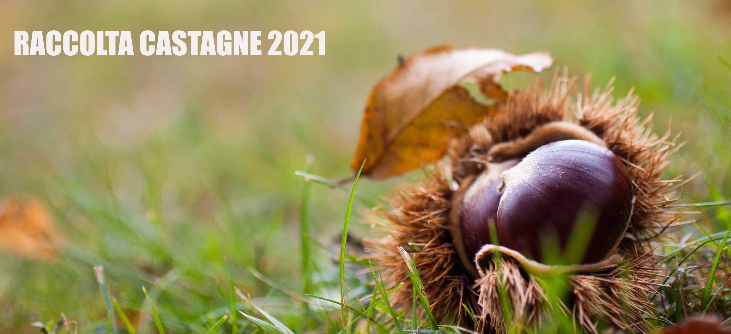 La tua vacanza nei Monti Sibillini emozionante anche in autunno con la raccolta castagne!